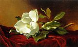 Martin Johnson Heade A Magnolia on Red Velvet Print