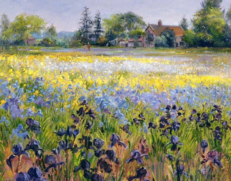 Timothy Easton Irises and Two Fir Trees Art Print